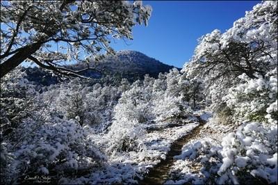 Little Walnut Trail Winter Sunrise