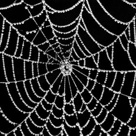 Captured with a Nikon CoolPix, this was almost a perfect web That I have ever seen. Used superimpose to create.