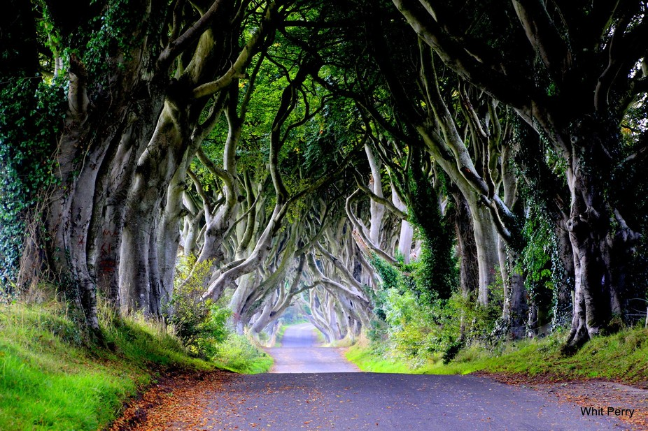 The Dark Hedges, a lane of beech trees planted in 1750 in Northern Ireland.
