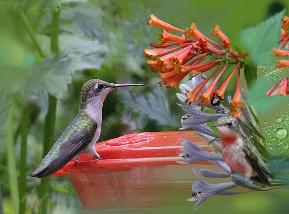 Summer lovely Visitors