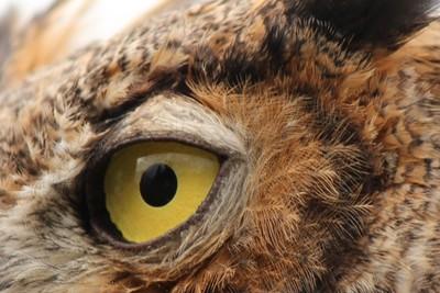 IMG_7411 Owl Eye Feathers