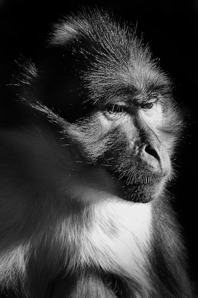 Monkey Deep In Thought