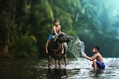 Bathing My Buffalo