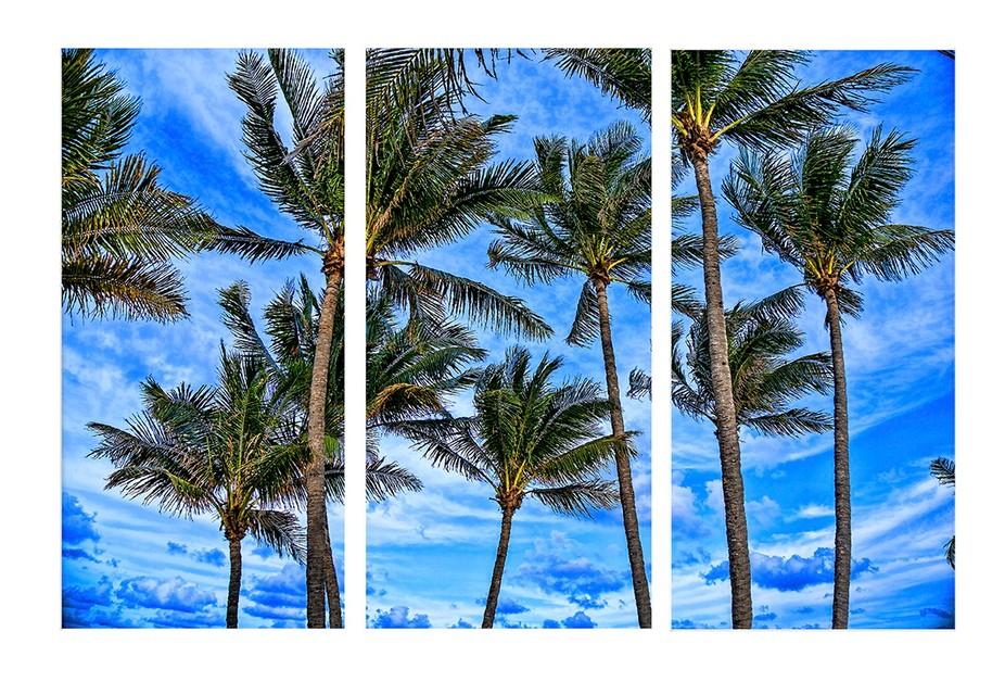 Beach Palms of Florida