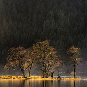My favourite stand of trees at Loch Chon in the Scottish Trossachs, backlit against the dark conifer forest by the low winter sun. Need to get aw...