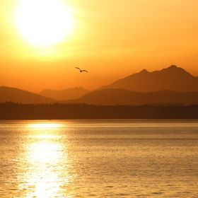 The sun sets behind a lone seagull on Elliott Bay. Seattle, Puget Sound, Olympic Mts, rickperry