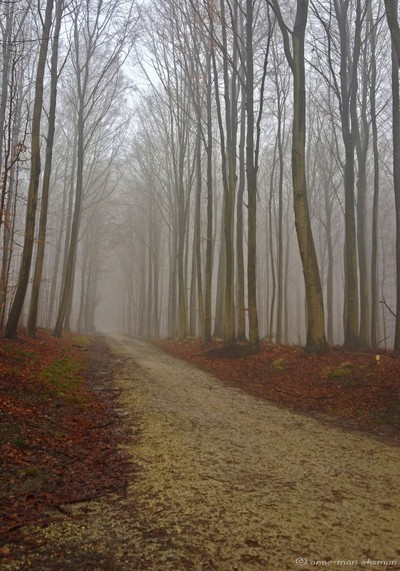 Misty Morning in a Forest