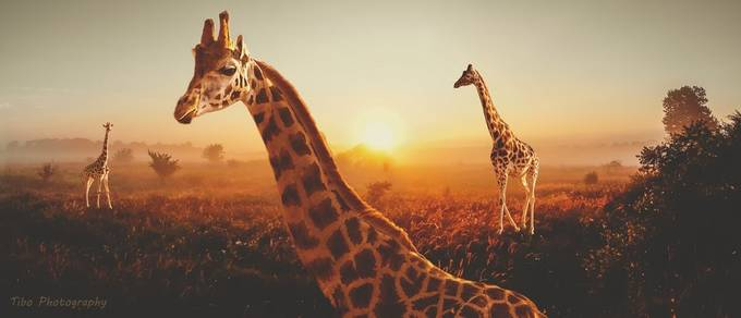 long necks by Celtic - Creative Reality Photo Contest
