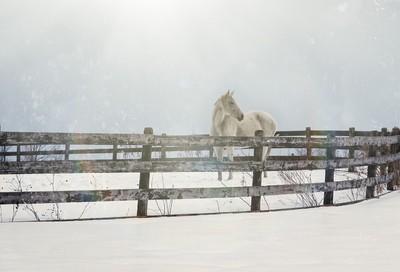 Lone Snowy White Horse