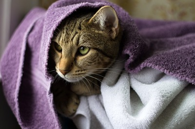 Hidden in the towels