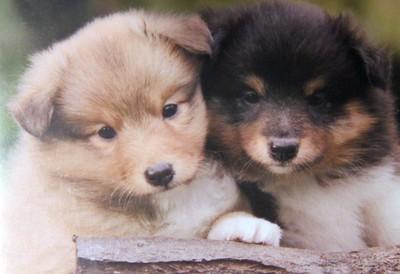 Posing Puppies