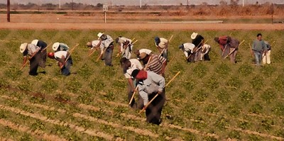 Migrant Farm Workers..,