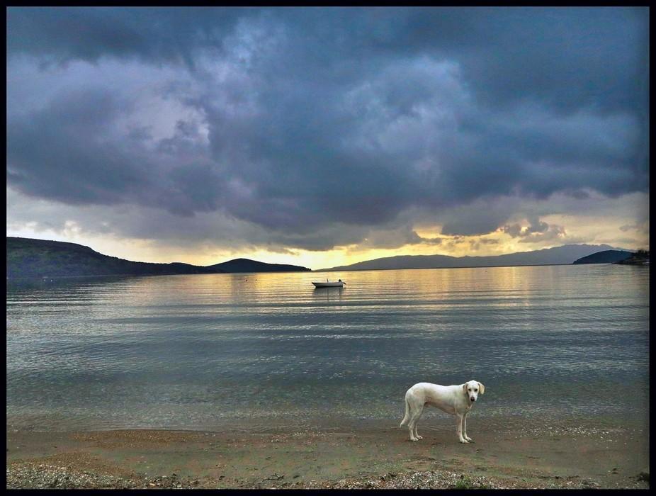 A dog on the beach