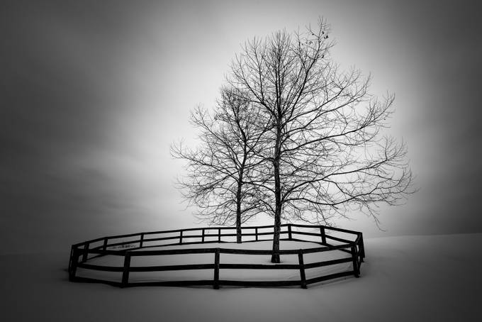 33+ Incredible Captures Of Trees In B&W