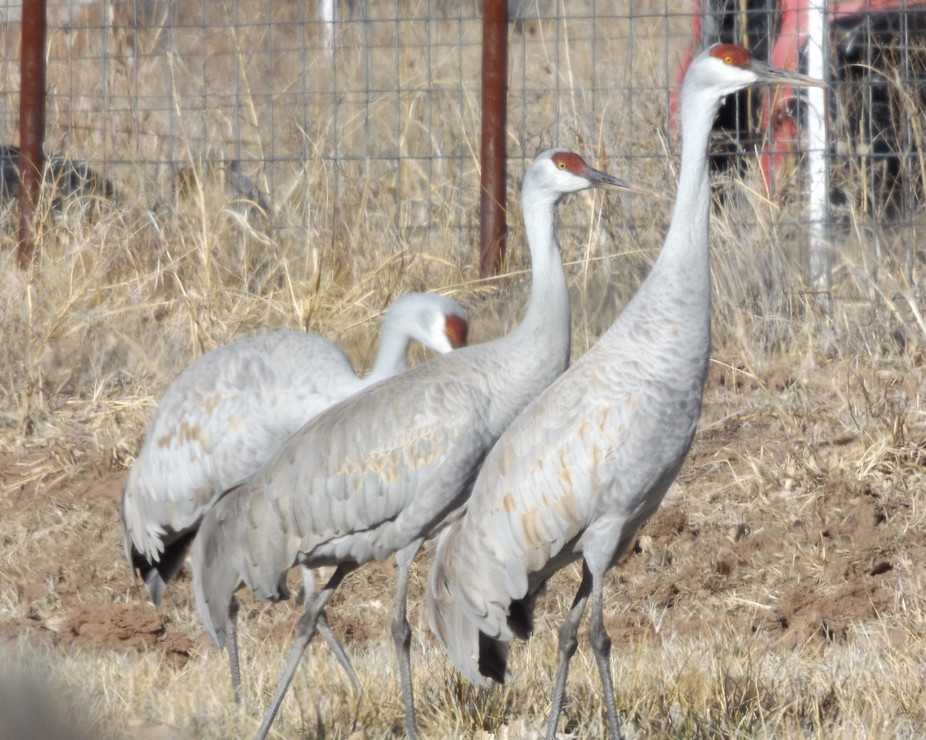 3 cranes