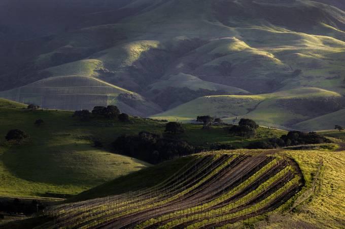 Sebastiani vineyard.  by leetomkow - Unforgettable Landscapes Photo Contest by Zenfolio