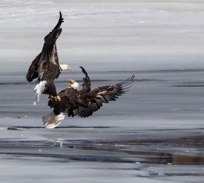 Talon to Talon