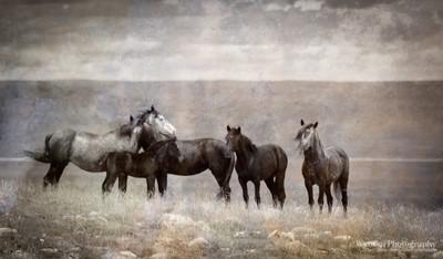 Wyoming Freedom