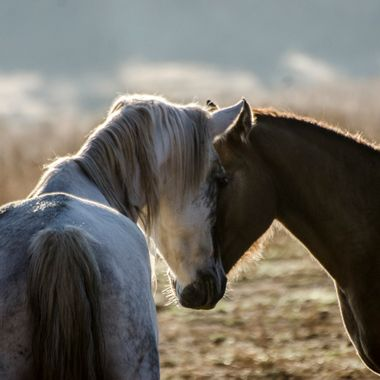 These two horses are wild horses allowed to run free on a non-profit safe haven in South Dakota.