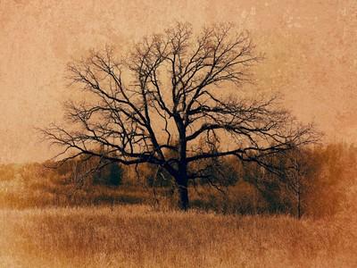 Wetlands Series - Big Oak Uplands