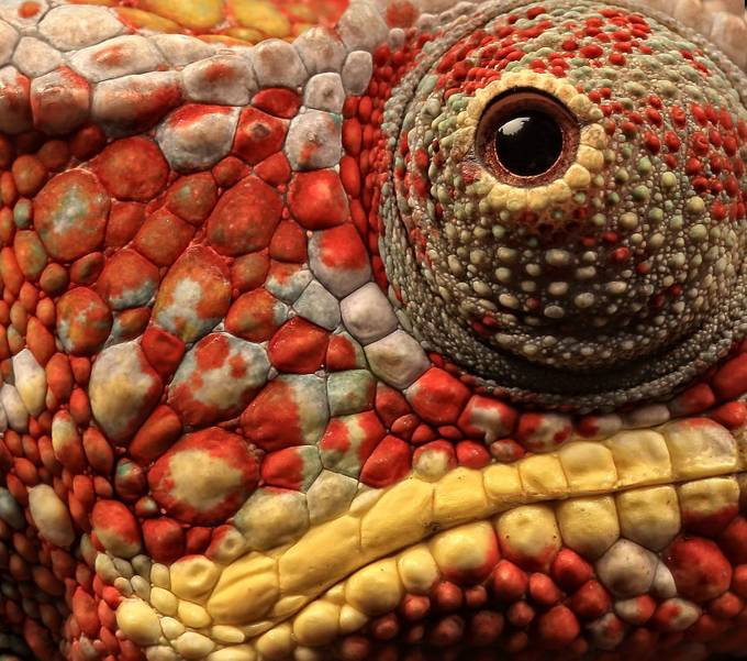Textures In Animals Photo Contest Winners