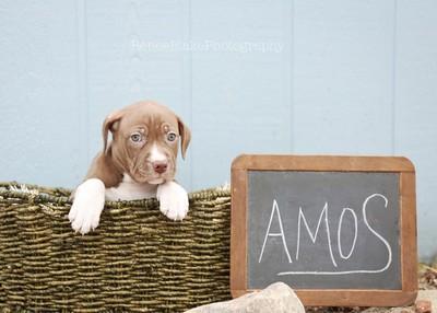 Amos ~
