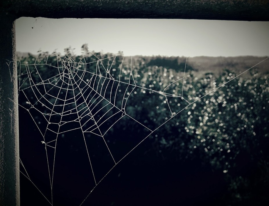 Beautiful evening at the beach when the sun was starting to set, this amazing spider web with con...