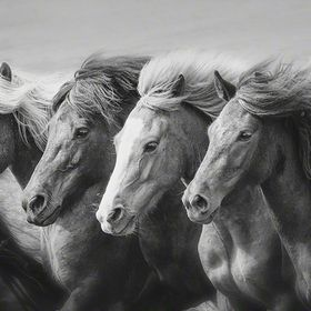 Each year I lead a tour to Iceland, we stay at a horse farm for a week and immerse ourselves in the culture. www.PhyllisBurchettPhoto.net