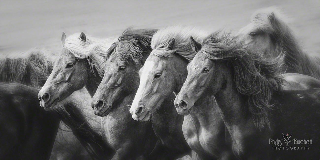 Community Spotlight The Horse Photography Of PhyllisBurchett Blog