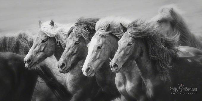 Party of Four by phyllisburchett - Awesomeness In Black And White Photo Contest