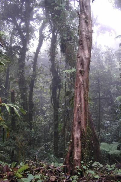 Costa Rica. Monteverde cloud forest