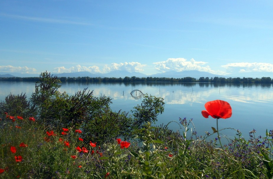 This photo was taken in Kerkini Lake, a beautiful artificial reservoir and a birding site in nort...