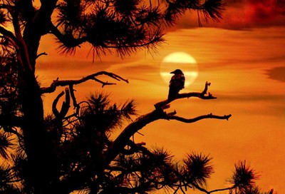BIRD with  SUNSET