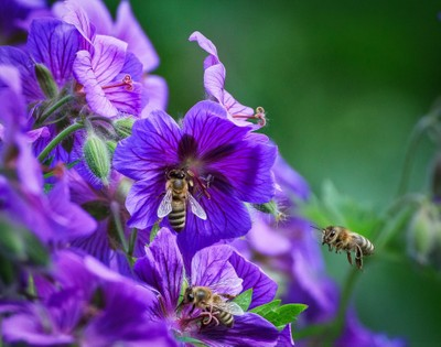 Bees x 3