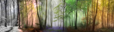 Forest Seasons Panoramic