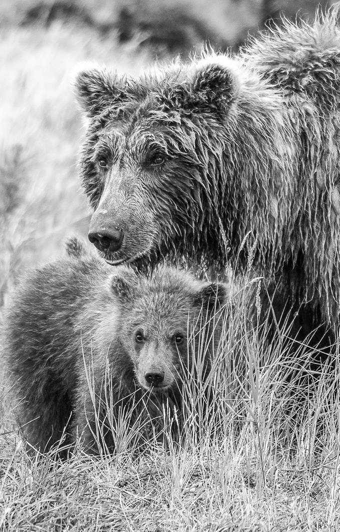 Protect by galsworth - Awesomeness In Black And White Photo Contest
