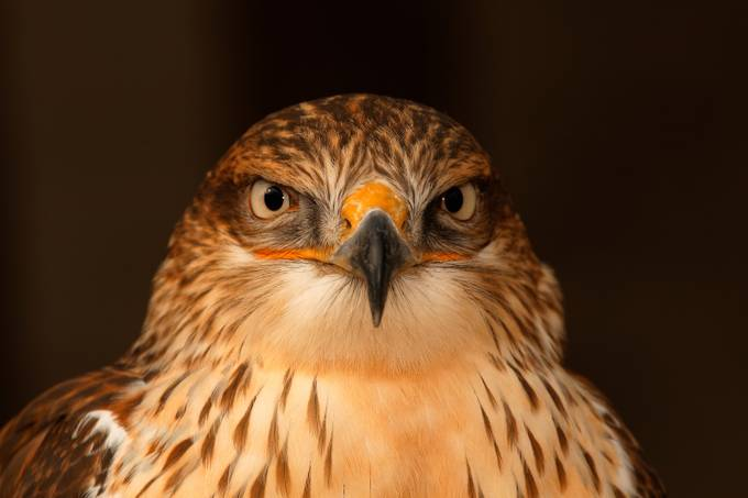 I see you by GEFAELL - Just Eagles Photo Contest