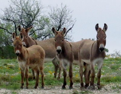 All in the Donkey family