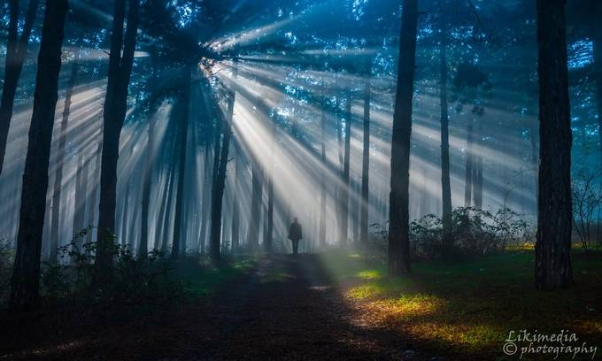 In the mist. by likimedia - Mist And Drizzle Photo Contest