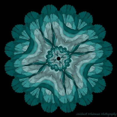 Blue Foot Flower