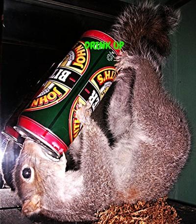 Drunken Squirrel .
