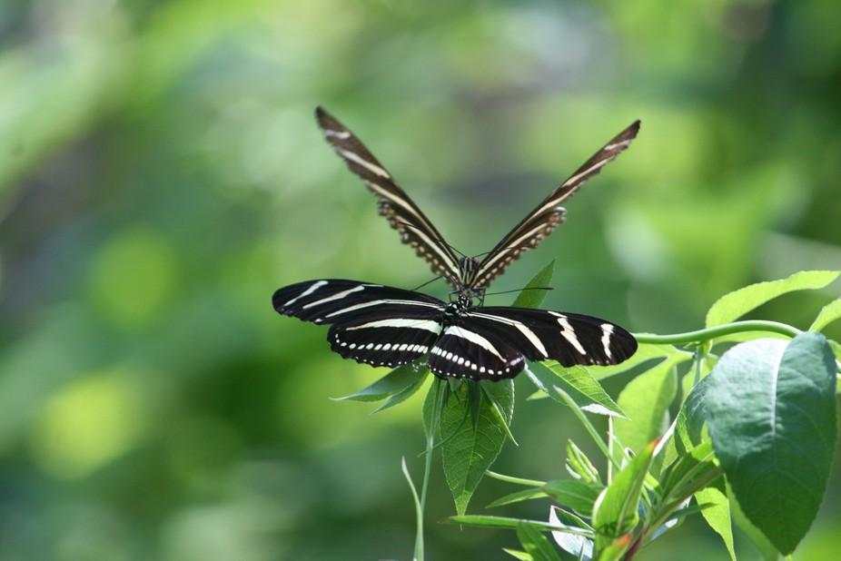 Taken at Spring Hill Botanical Garden