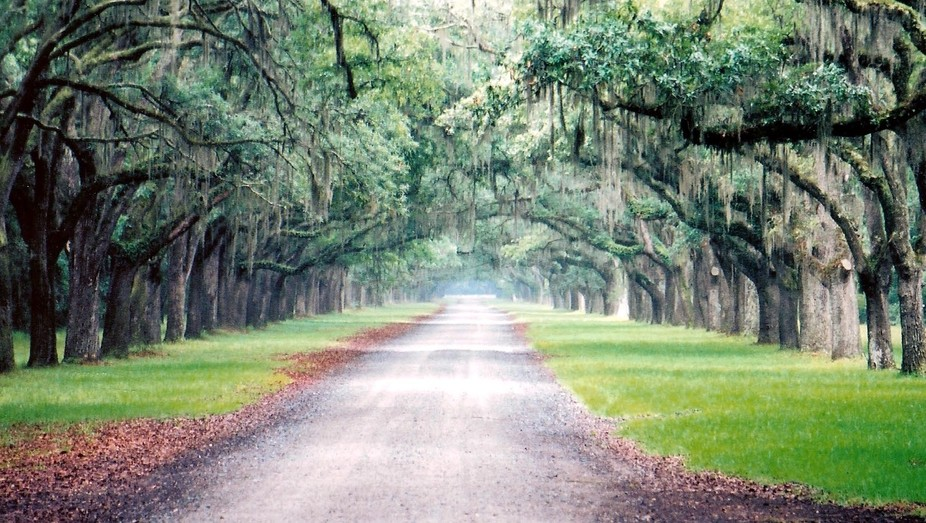Wormsloe (2003 Savannah Vac)_edited