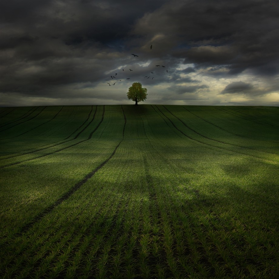 day after by tadejturk - Lost In The Field Photo Contest