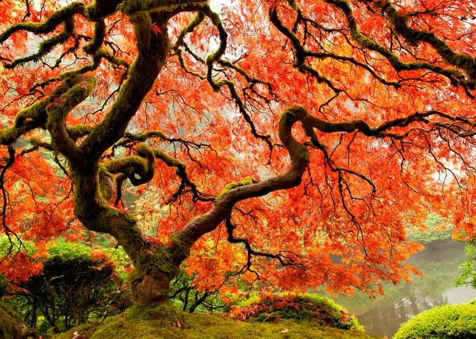 Gnarled by kathykuhn100 - Image of the Year Photo Contest by Snapfish