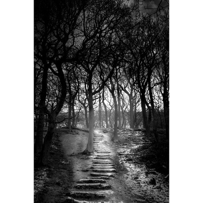 Stick to the path! #woods #forest #instamoods #creepy #eerie #instacreepy #b