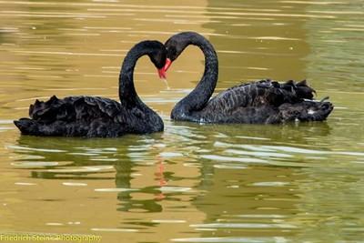 Love birds, I like the heart their necks formed...