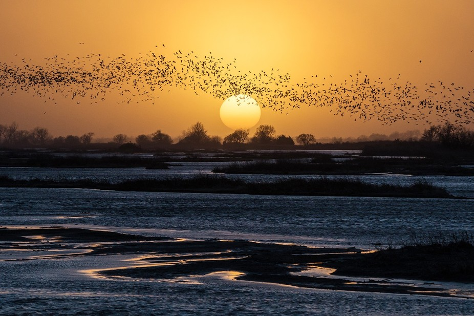 Thousands of Sandhill Cranes flock to the Platte River to bed down for the night.