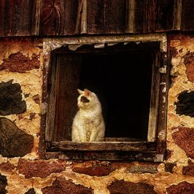 Barn cat sitting in the broken window, his eye patch fully matching the pattern of the rocks used to construct the vintage, out of alignment buil...