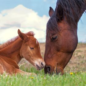 This is an important time in the life of a new foal. He is only a few days old and a lot of important information is passed from mare to foal. Mo...